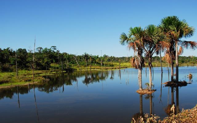 palmen-im-wasser.jpg