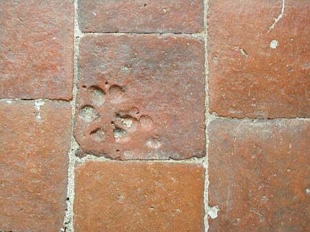 bodenhundetatze-fev-2005-027.jpg
