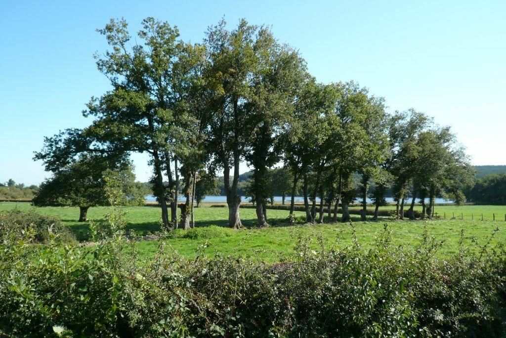 landschbaume011.jpg